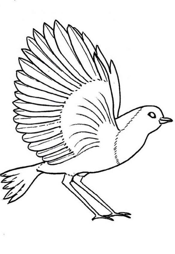 robin bird coloring page