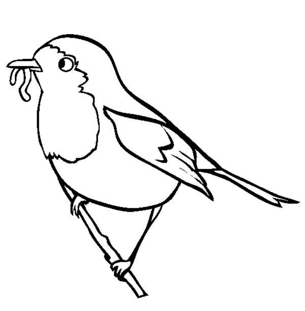 robin bird eat worm coloring page