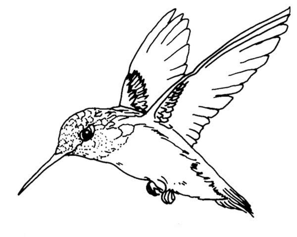 ruby throated hummingbird bird coloring page