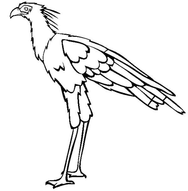Coloring Pages Birds