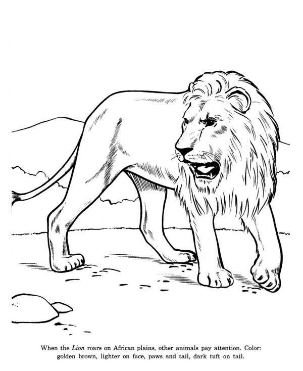 Lion, : African Lion Coloring Page