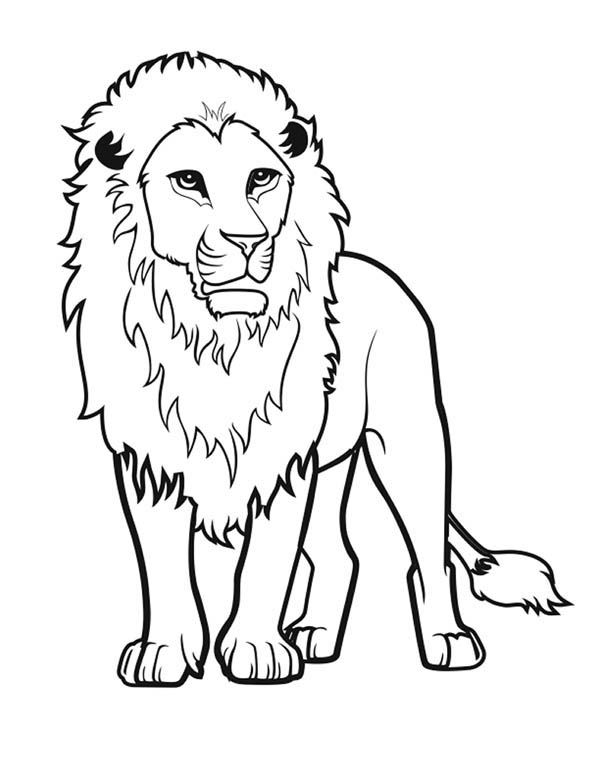 Lion, : Awesome Lion Drawing Coloring Page