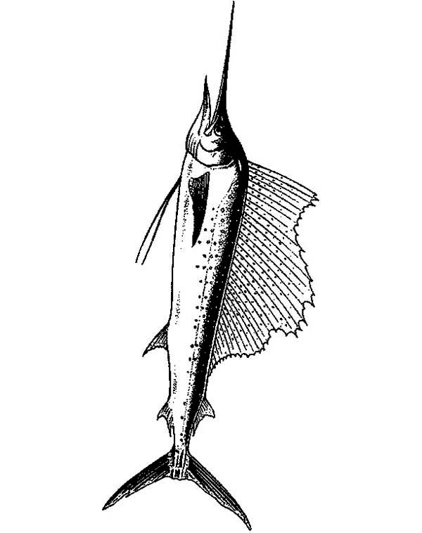 Swordfish, : Beautiful Fin of Swordfish Coloring Page