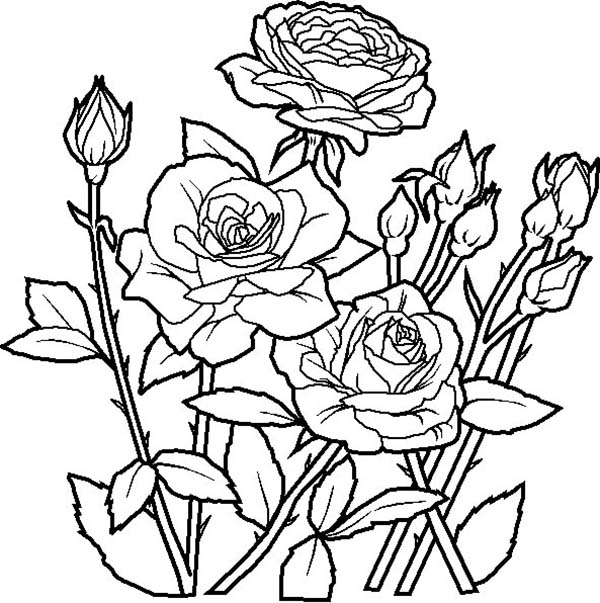 Spring Flower, : Beautiful Rosed Spring Flower Coloring Page