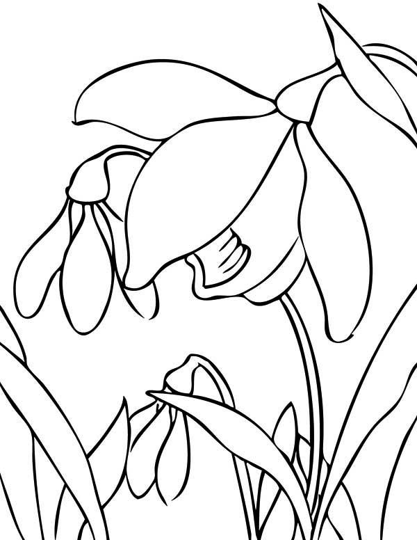 Spring Flower, : Best Spring Flower Picture Coloring Page
