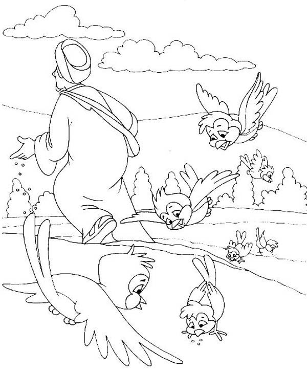Parable of the Sower, : Birds Eat Falling Seed in Parable of the Sower Coloring Page