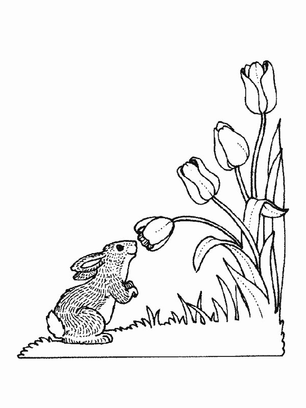 Bunny Smelling Flower Of Nature Coloring Page