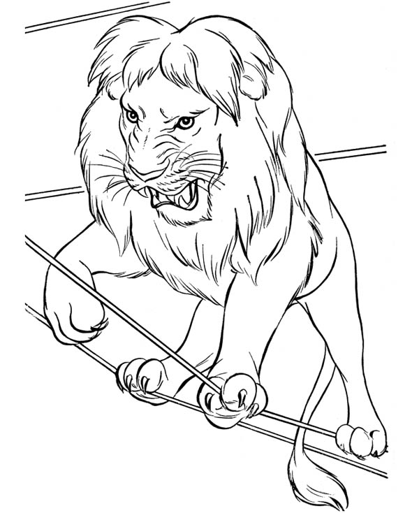 Lion, : Circus Lion Walking on Rope Coloring Page
