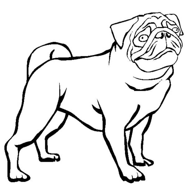 dutch bulldog pug coloring page - Pug Pictures To Color