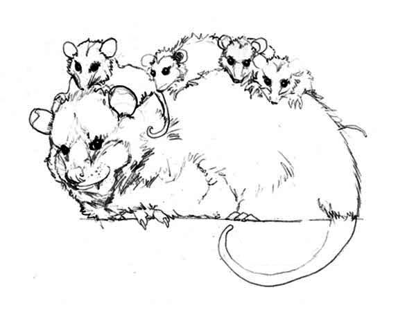 Possum, : Family of a Possum Coloring Page