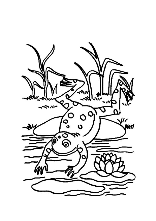 Frog Jump To Pond After Sit On Lily Pad Coloring Page