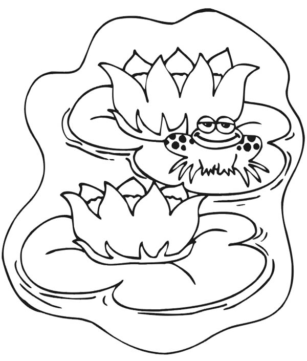 Lily Pad, : Frog Smile While Sitting on Lily Pad Coloring Page