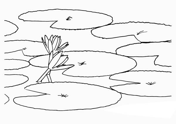 Lily Pad, : How to Draw Lily Pad Coloring Page