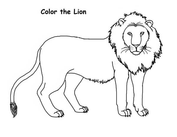 How to draw a lion coloring page