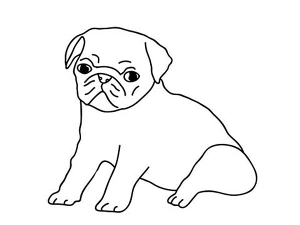 Pug, : How to Draw a Pug Coloring Page