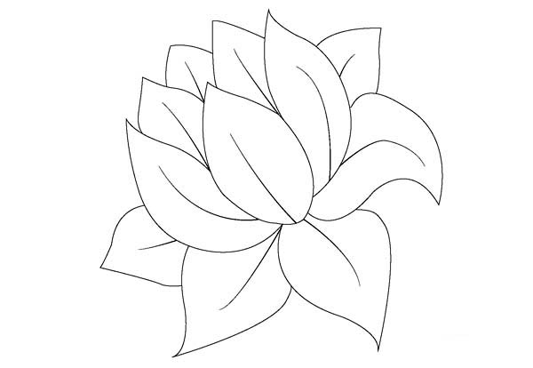 lily pad without lily pad coloring page