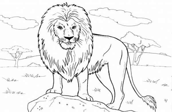 lion standing on a rock coloring page - Lion Coloring Pages
