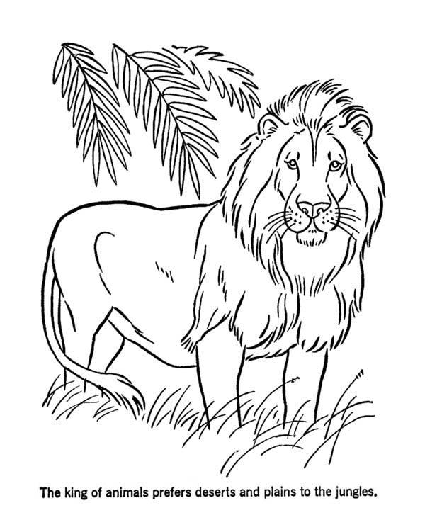 lion animal coloring pages. Lion The King Of Animals Coloring Page the of  Color Luna