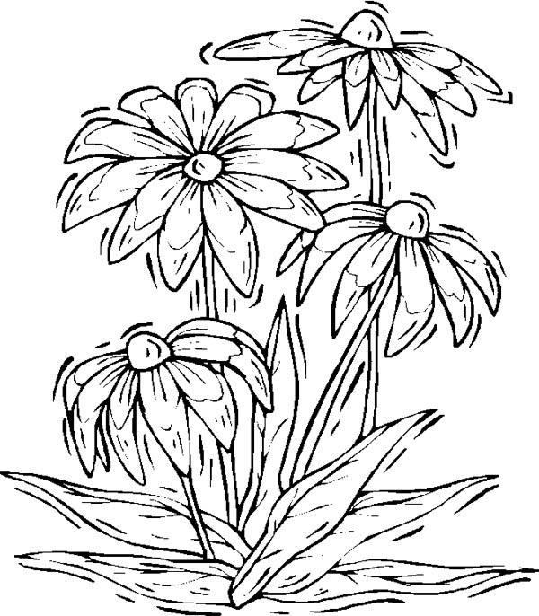 Nature, : Lovely Flower of Nature Coloring Page