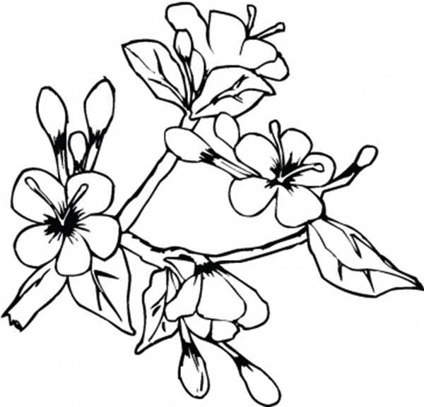 Spring Flower, : Lovely Spring Flower in Blossom Coloring Page