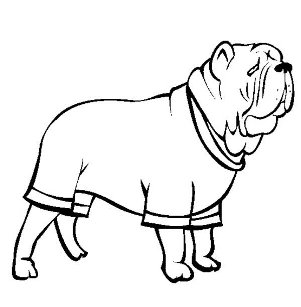 Pug, : Neapolitan Mastiff  Pug Dog Coloring Page