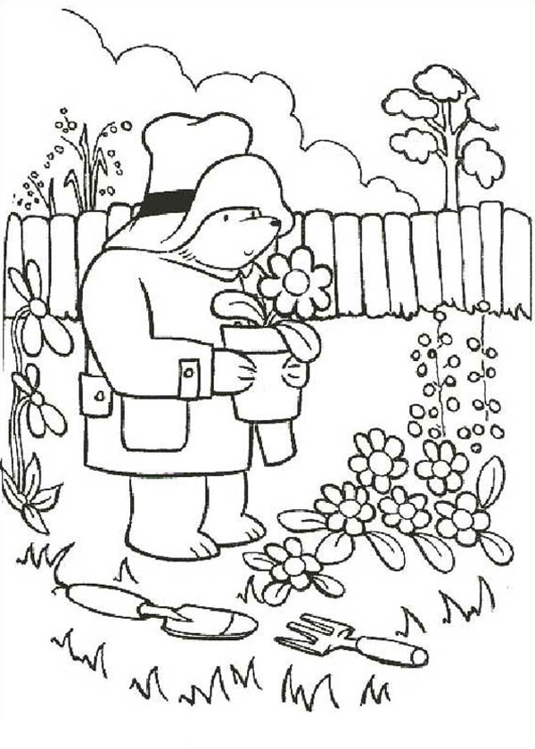 Paddington Bear, : Paddington Bear Gardening Coloring Page
