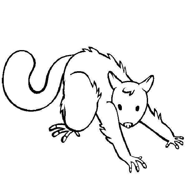 Possum, : Possum Doing Streching Coloring Page