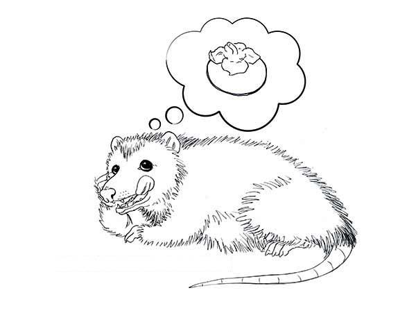 Possum, : Possum Imagine Eating Fruit Coloring Page