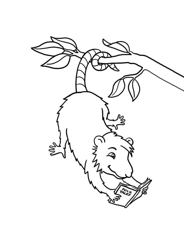 Possum, : Possum Reading a Book Coloring Page