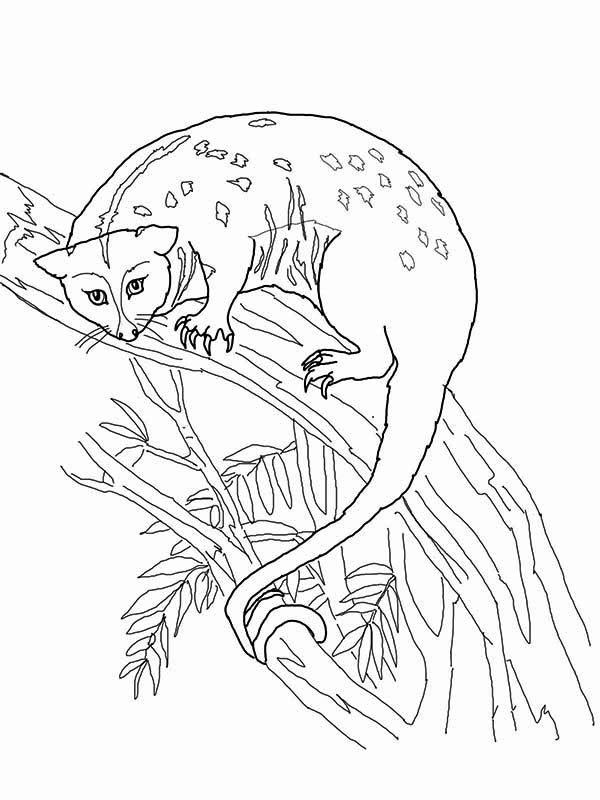 Possum, : Possum Up on Tree Coloring Page