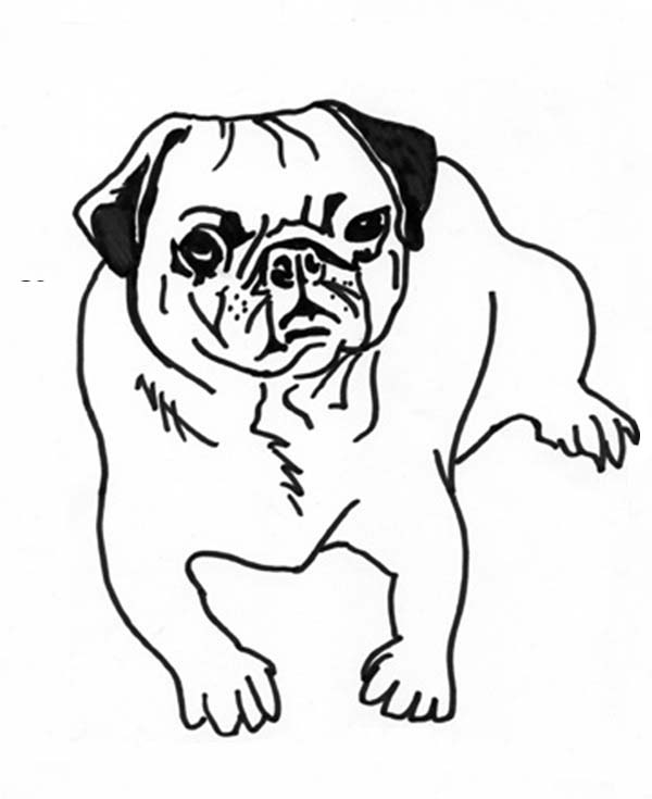 Free coloring pages of dog and pug for Pug coloring pages to print