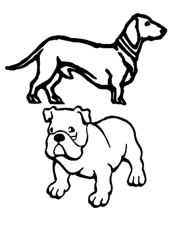 Pug, : Pug Dog and Slinky Coloring Page