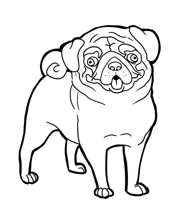 Pug, : Pug Funny Face Coloring Page
