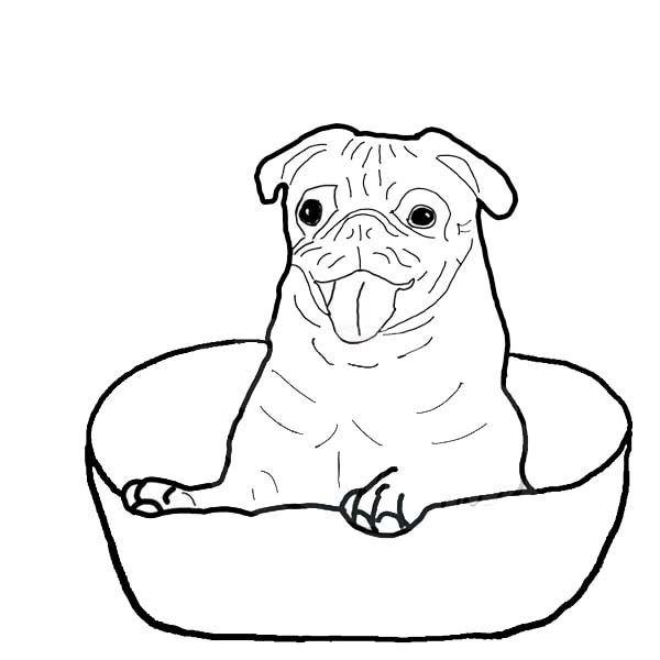 Pug is Happy Inside a Bowl Coloring Page Color Luna