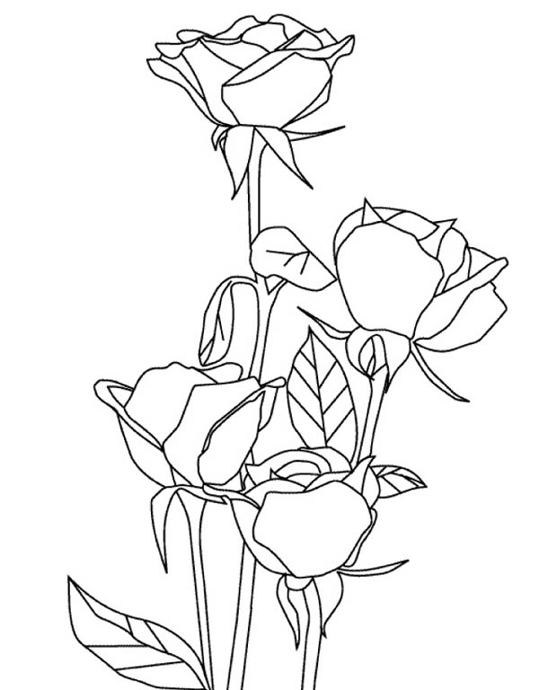 Nature, : Roses of Nature Coloring Page
