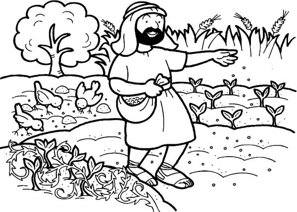 Parable of the Sower, : Seed that Falling into Good Soil in Parable of the Sower Coloring Page