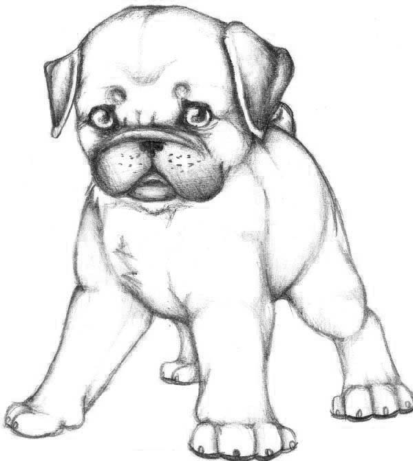 Skecth of Pug Dog Coloring Page | Color Luna