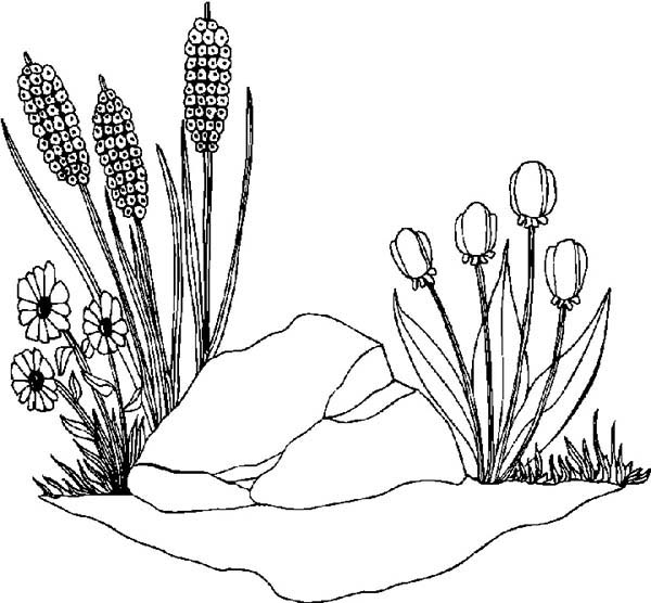 Spring Flower, : Spring Flower Grow Between a Rock Coloring Page