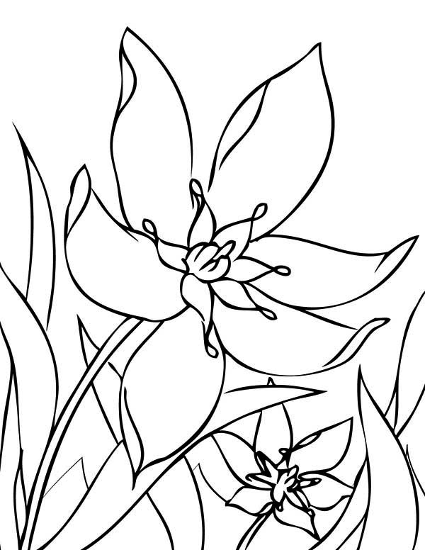 Spring Flower, : Spring Flower in the Garden Coloring Page
