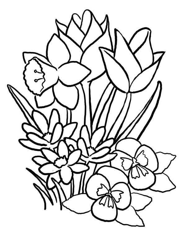 Nature, : Spring Flower of Nature Coloring Page