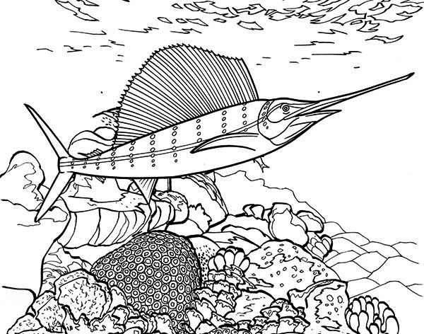Swordfish, : Swordfish Between Coral Reef Coloring Page