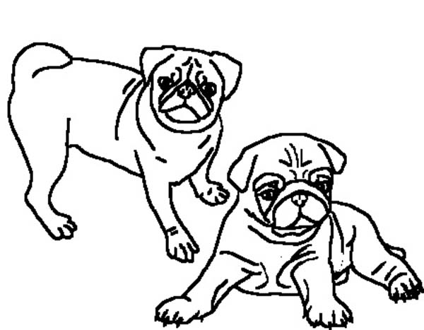 Two Beautiful Pug Coloring Page Color Luna