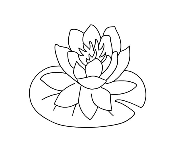 Water lily over lily pad coloring page