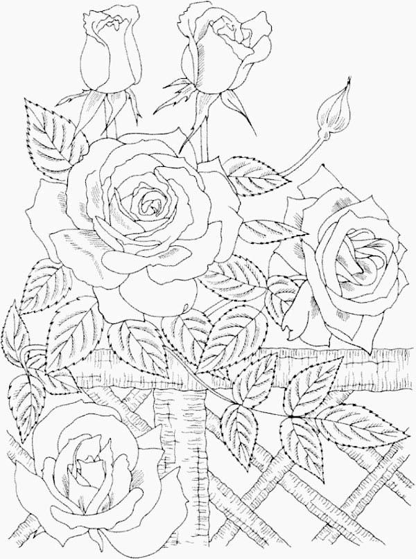 Nature, : Beautiful Wild Roses in Nature Coloring Page
