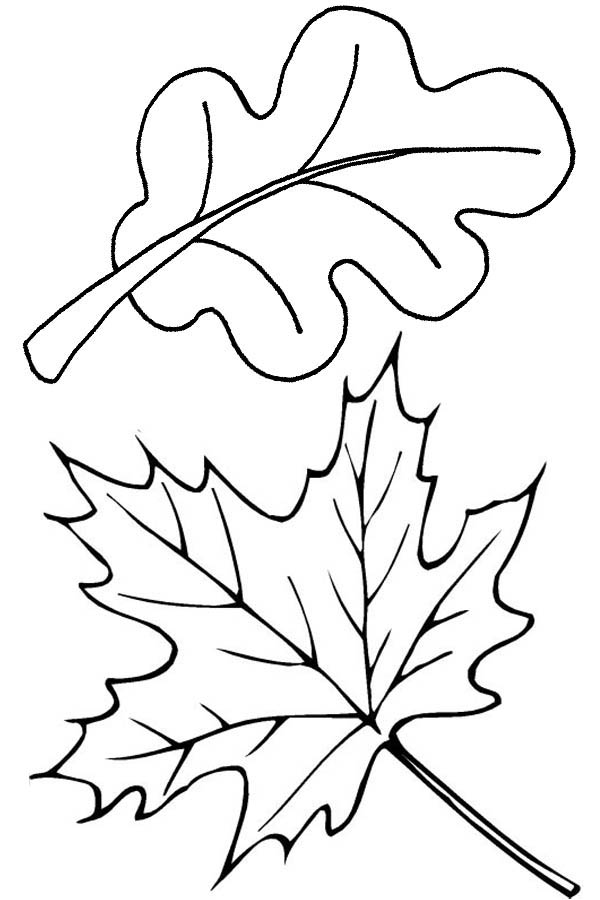 autumn leaves in autumn coloring page