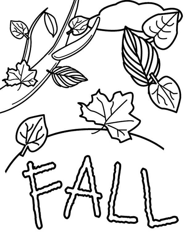 Autumn, : Fall Leaves in Autumn Season Coloring Page