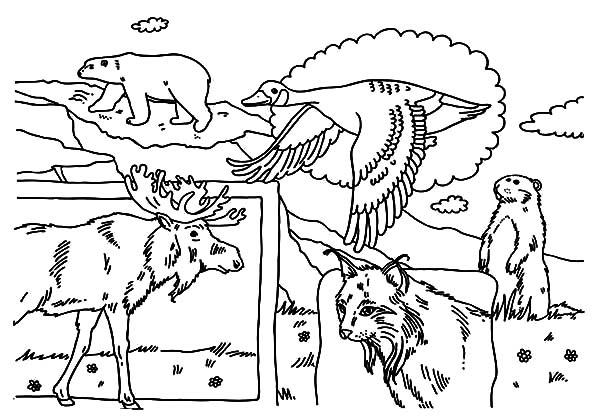 indigenous animals on canada day 2015 coloring pages color luna. Black Bedroom Furniture Sets. Home Design Ideas