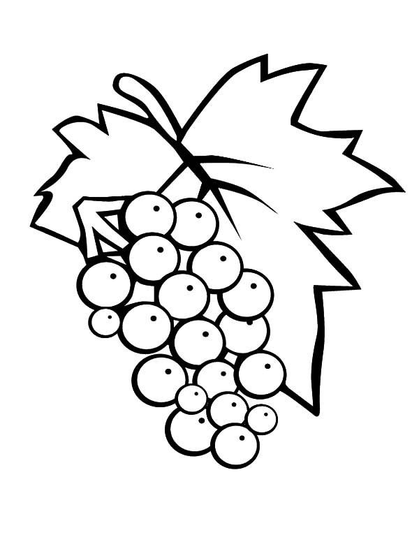 Grapes, 3438 Eps Red Grapes: 3438-eps_red-grapes