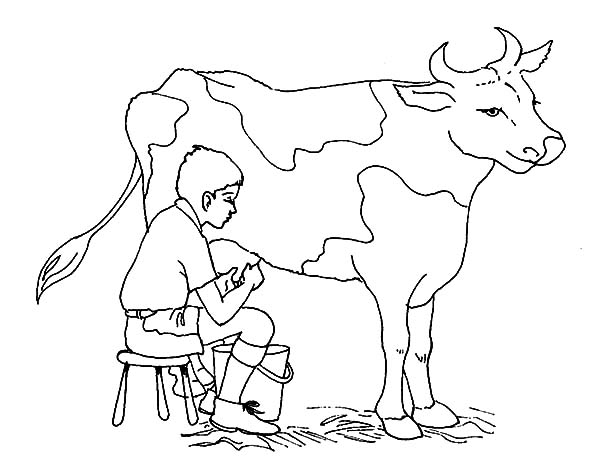 A Boy Milking Cow Coloring Pages