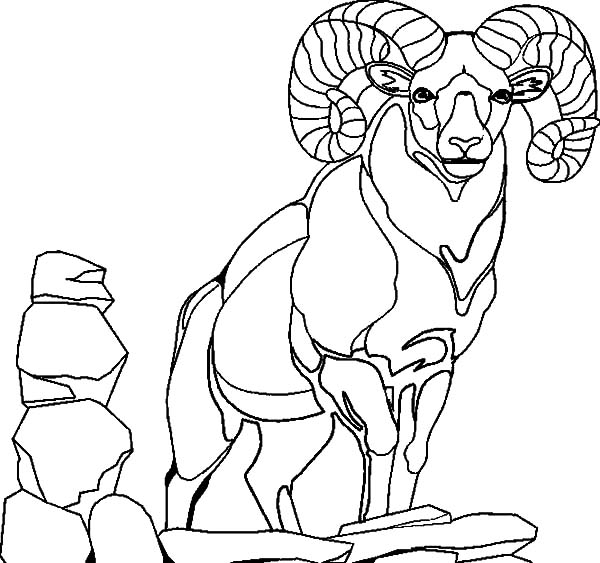 Goat, Alpha Male Goat Coloring Pages: Alpha Male Goat Coloring Pages